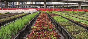 New Gen City Farming