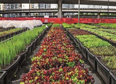 city-farming-3-1680x750-1